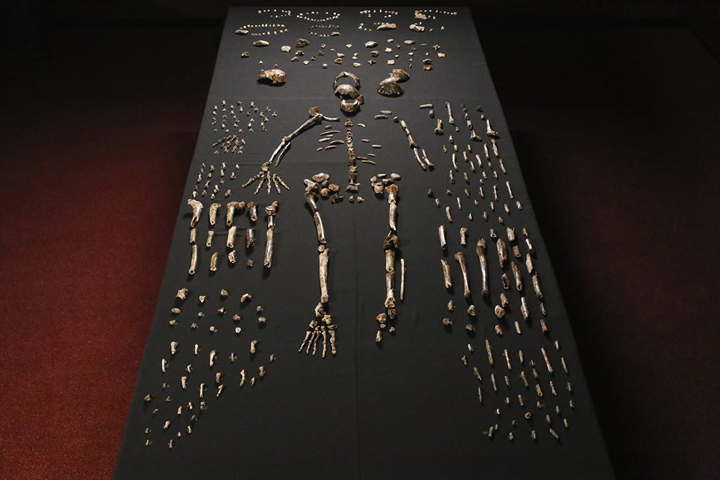 WEB_PHOTO_HOMONALEDI_SKELETON_07082015