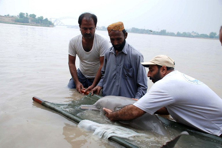 Web_photo_IndusRiverdolphin_041114