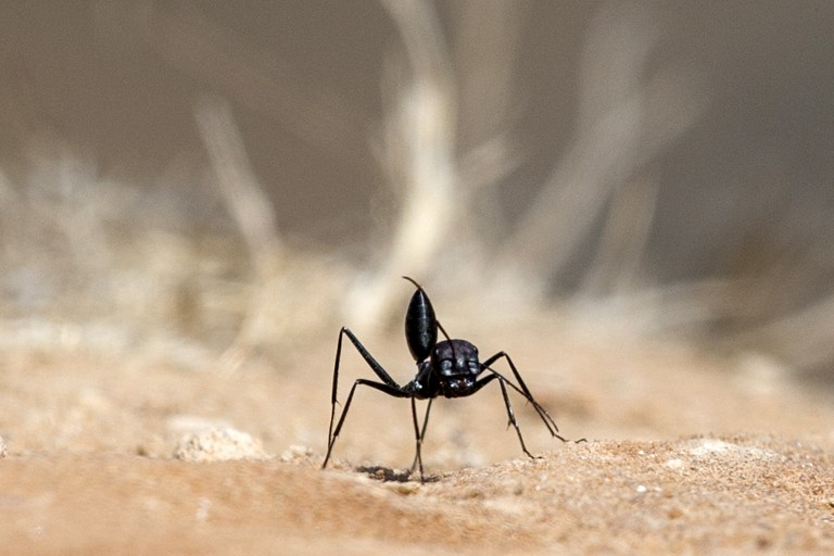 WEB_PHOTO_BLACK_ANT_120417