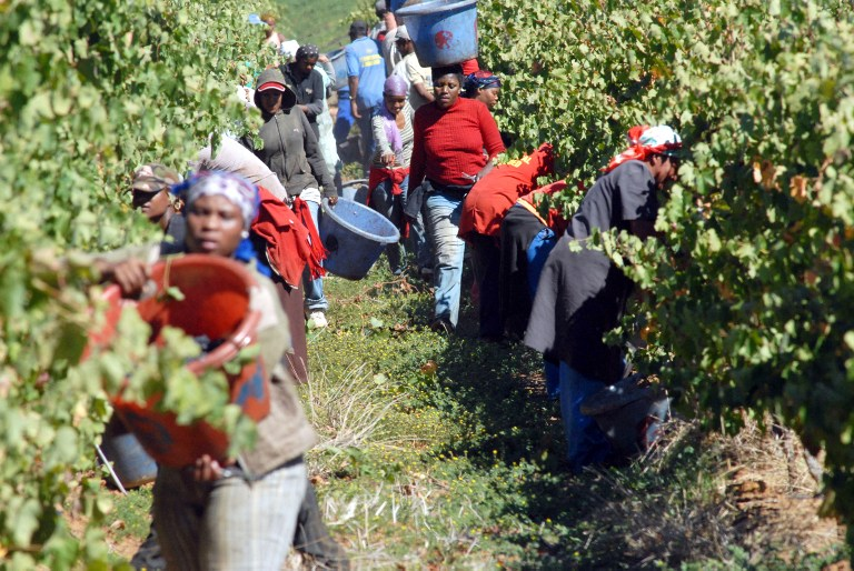 Farm workers and farmers will celebrate Oesfees in style.