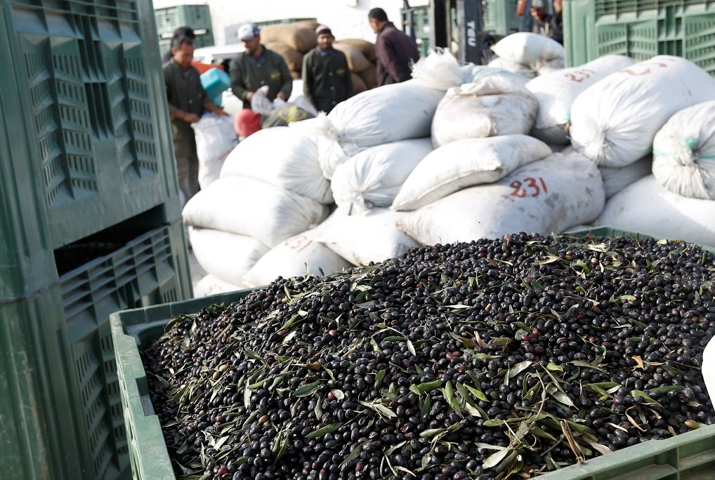 Tunisia expects surge in olive oil production | eNCA