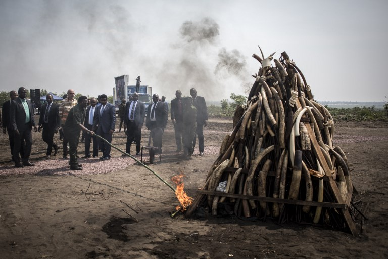 President of the Democratic Republic of the Congo (DRC), Joseph Kabila, lights a pile ivory during a ceremony where he will burn one ton of ivory and pangolin scales on September 30, 2018 in Kinshasa.