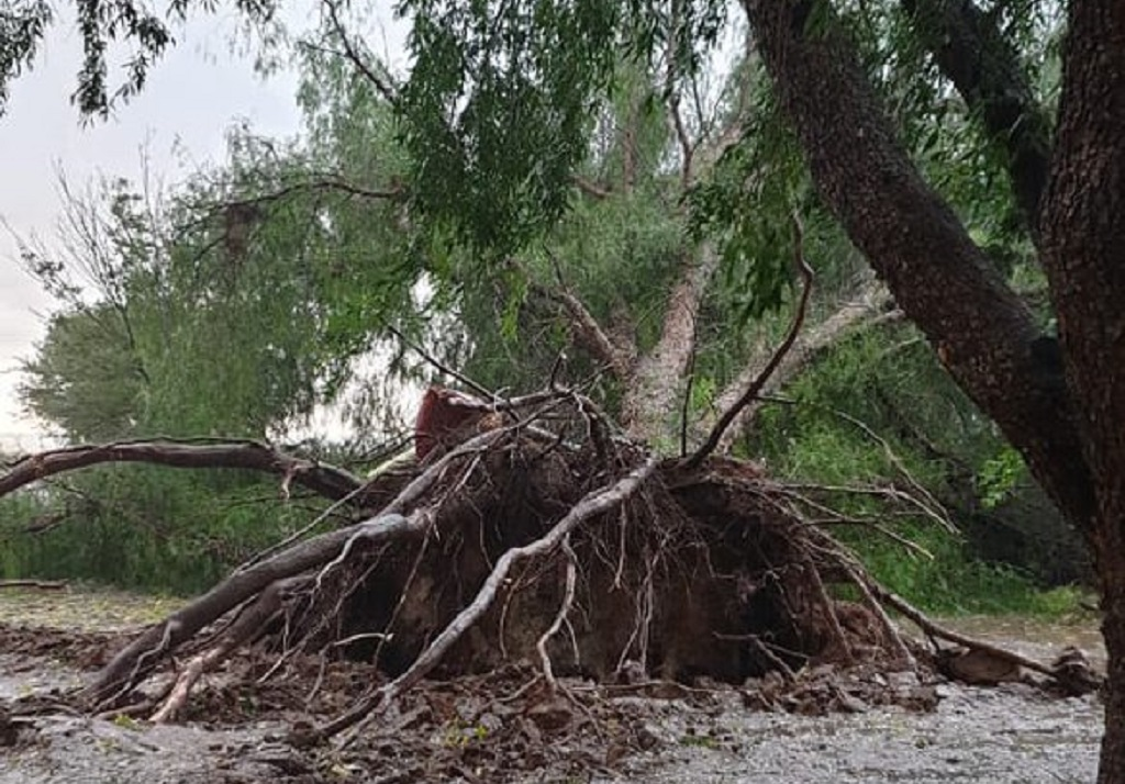 Trees were uprooted in Waterbron, northwest of Bloemfontein on Wednesday.