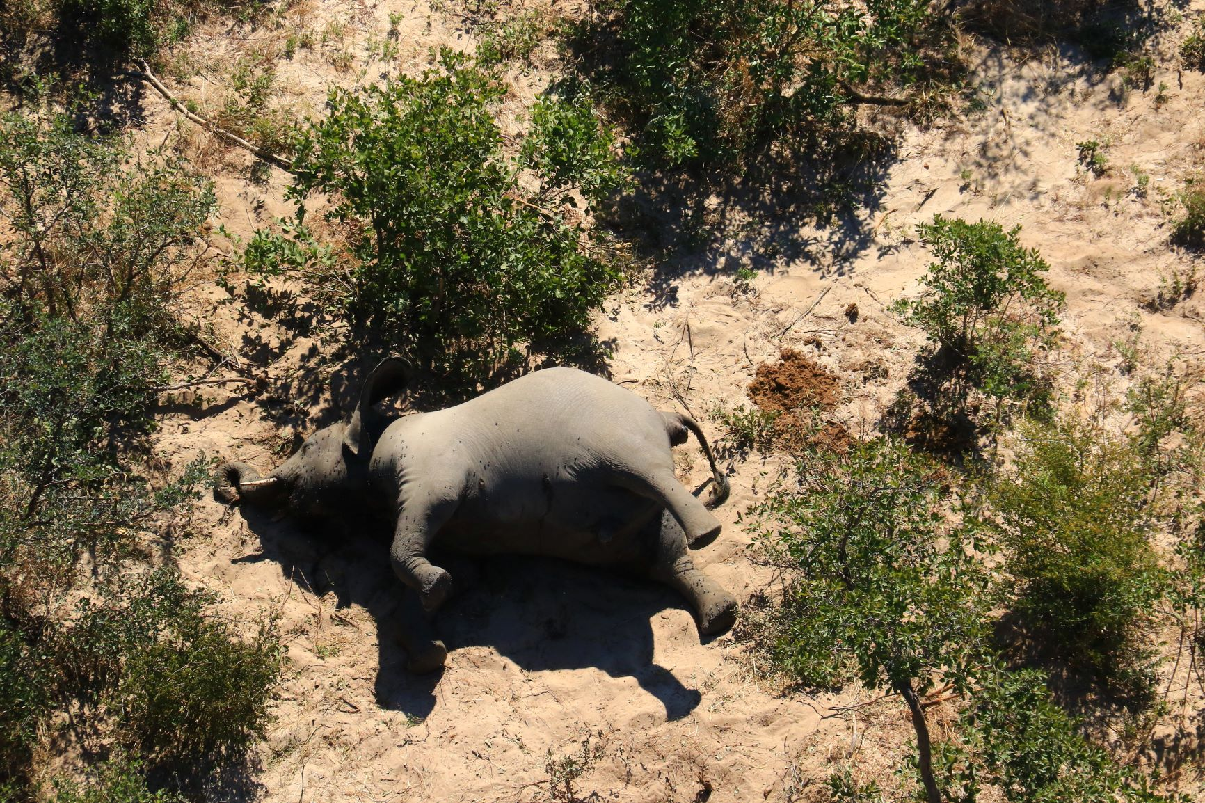Botswana elephant deaths 'caused by toxins'