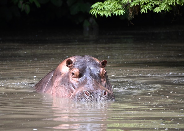 Child survives hippo attack, three killed in Musina | eNCA