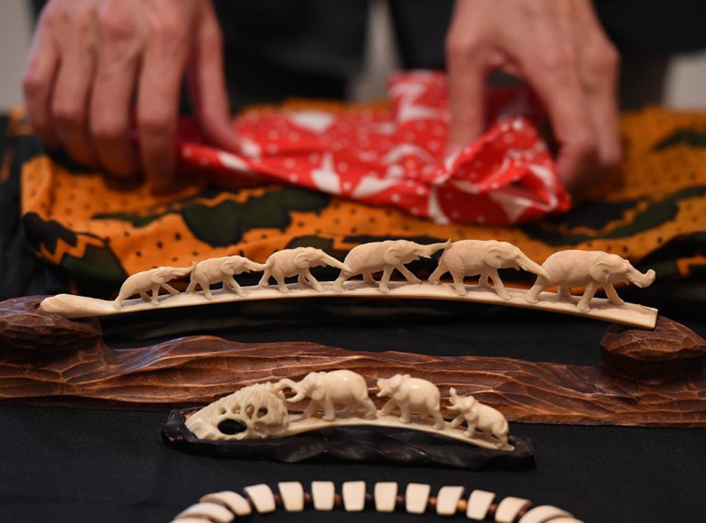 41eed5c27 Illegal ivory price drops dramatically