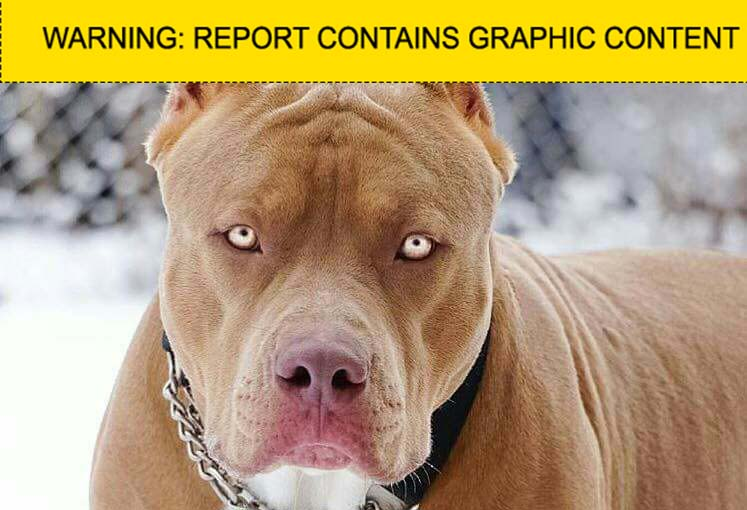 Checkpoint: Pit bull theft | eNCA
