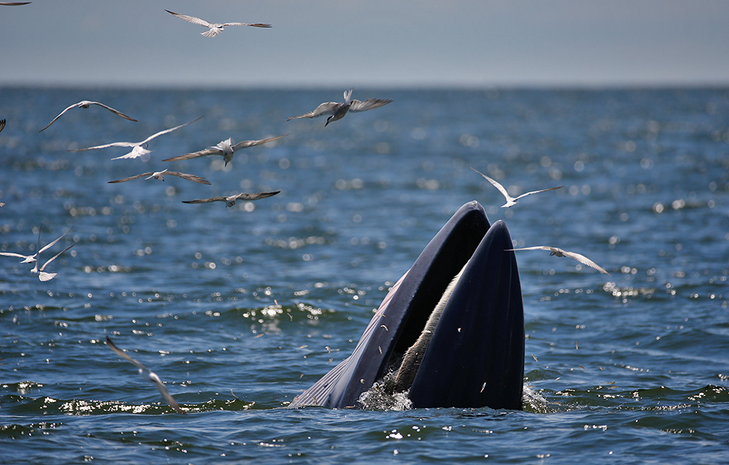 WEB_PHOTO_WHALE_TWO_271215
