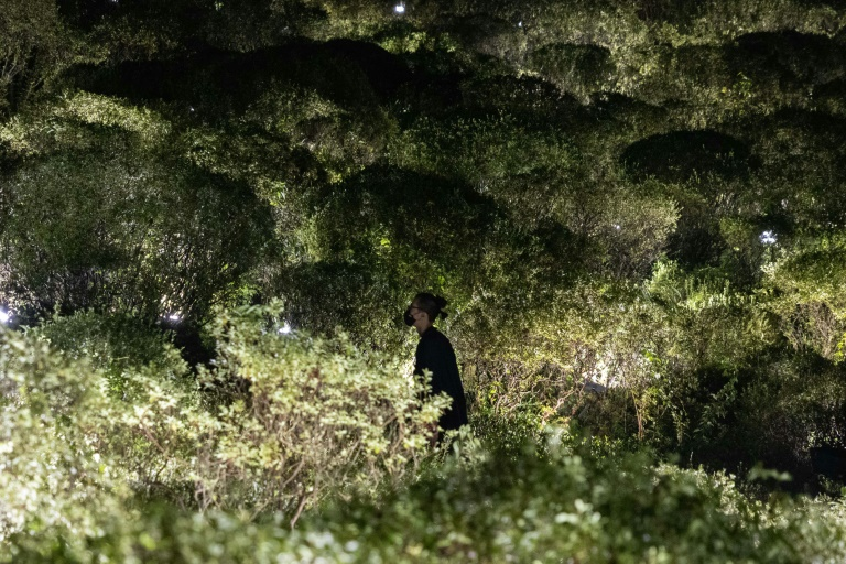 Sensors hidden in a thicket of azaleas detect when people walk past