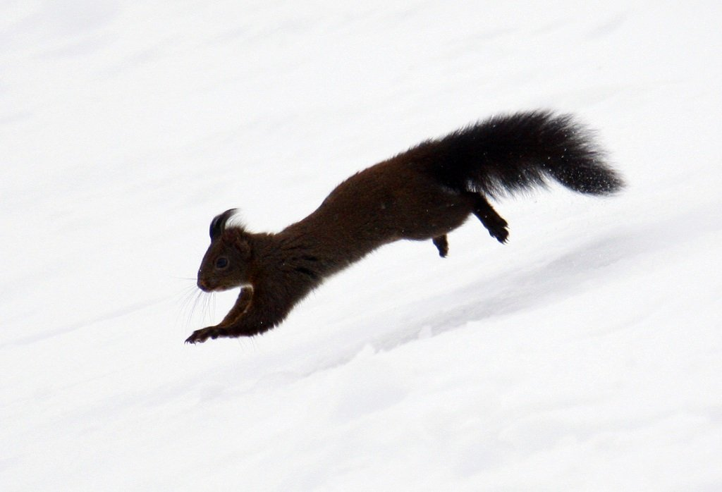 Web_Photo_Squirel_Olymipcs_20180224