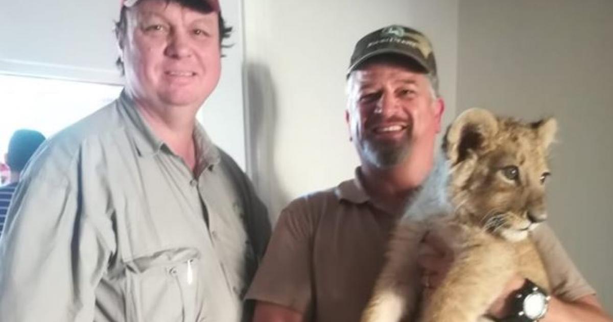 Lion welpie gered in die voorstad van Kaapstad - eNCA