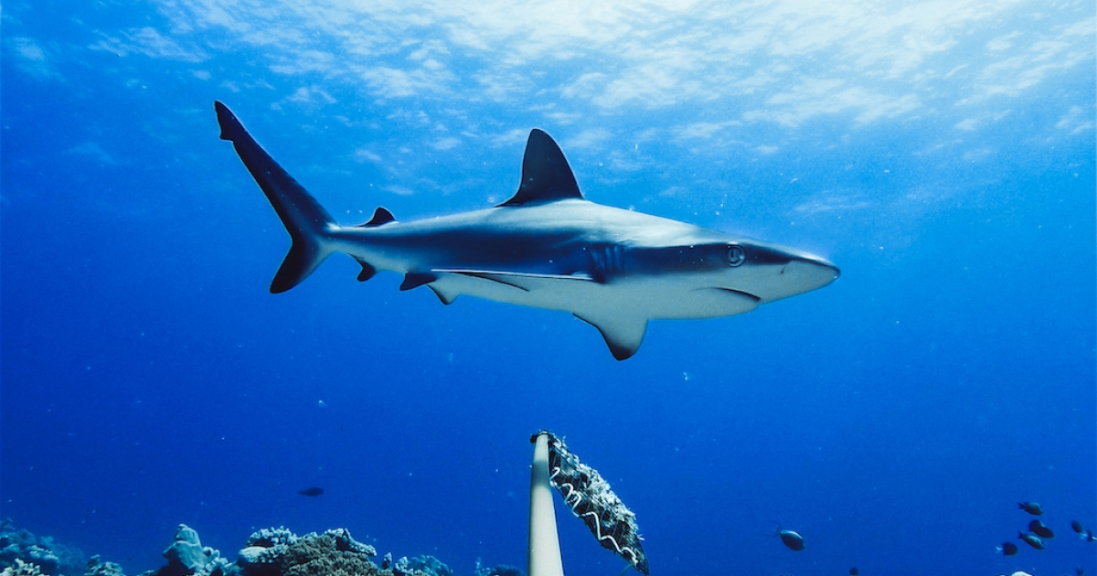 SA's plan to protect sharks needs an urgent update