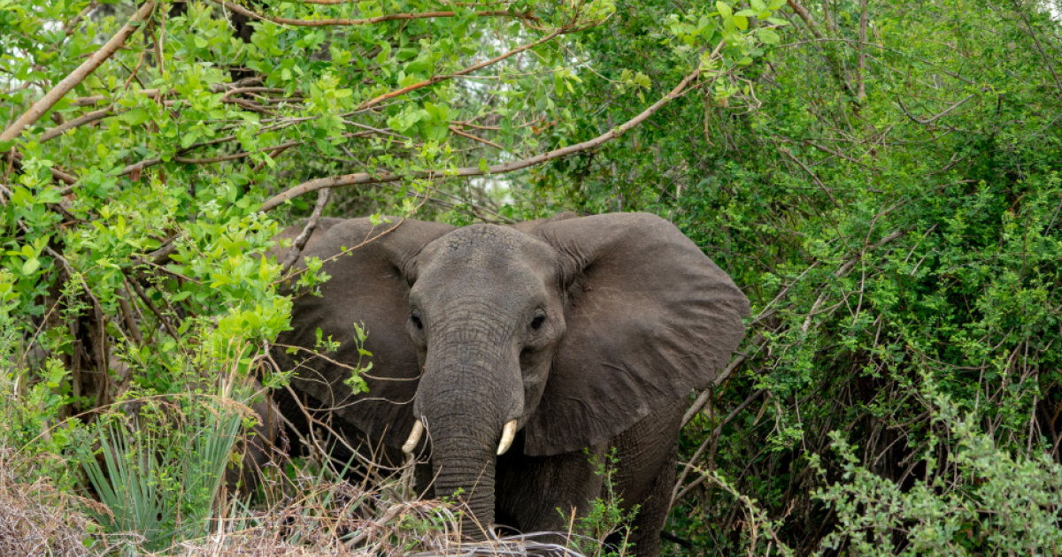 Elephants kill poacher at Kruger Park