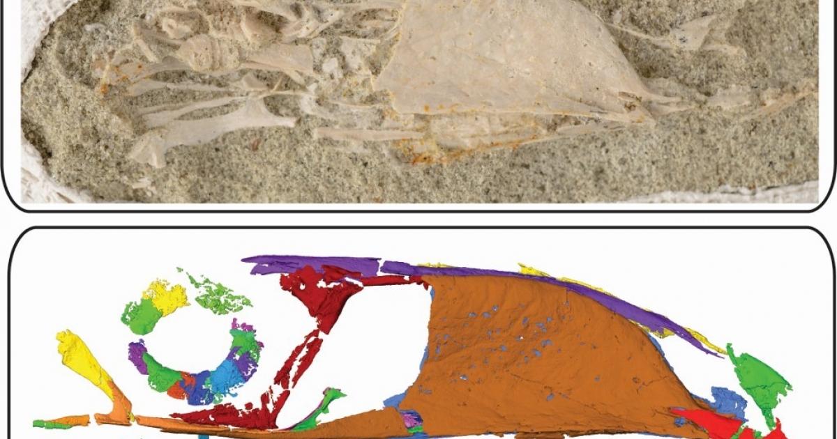 Ancient bird's big beak breaks new scientific ground - eNCA
