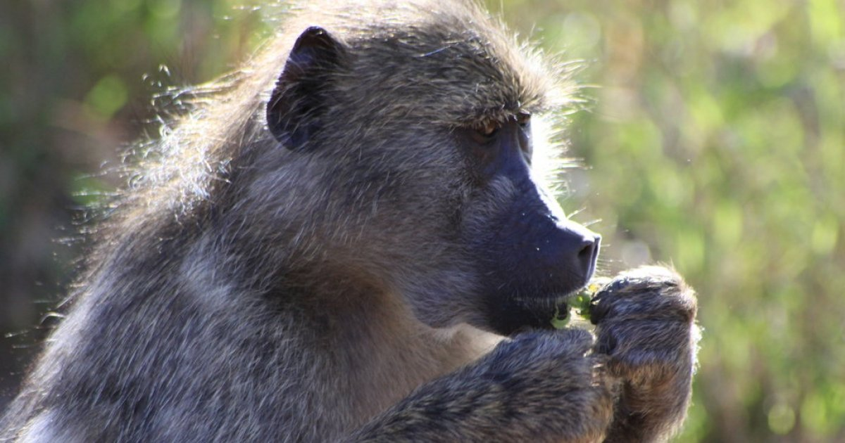UPDATE: Baboon spotted on Sandton hotel's roof - eNCA
