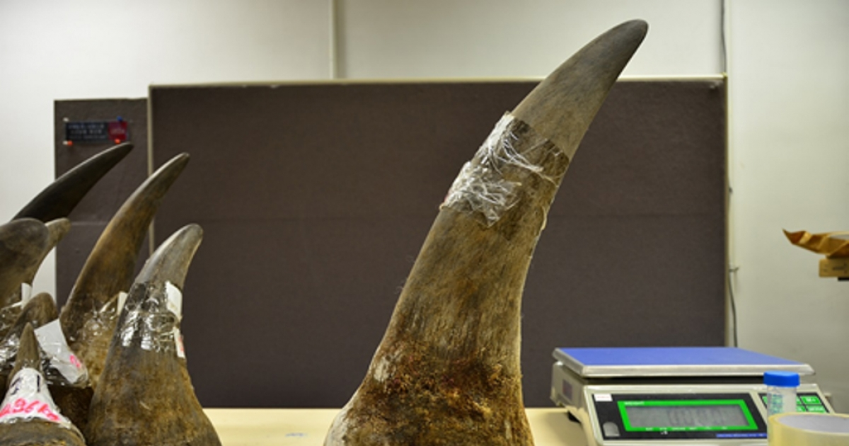 OR Tambo customs officials seize R115mn in rhino horns - eNCA