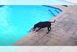 Dog rescue out of pool